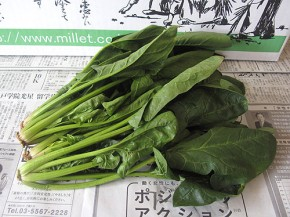 ほうれん草(無農薬野菜ミレー)