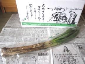 長ネギ(無農薬野菜ミレー)