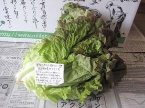 サニーレタス(無農薬野菜ミレー)