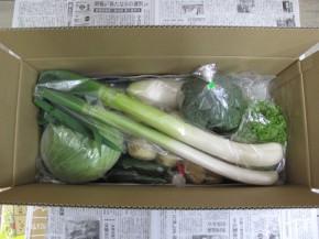 真上から見た、田舎野菜Mセット