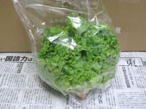 九州ムラコレ市場、グリーンリーフ