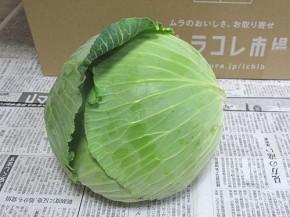 九州ムラコレ市場、キャベツ