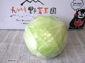 早生キャベツ(九州野菜王国)