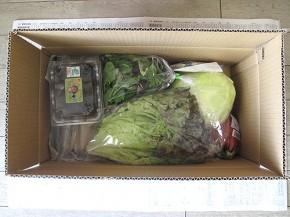 真上から見た、九州野菜王国お試しセット