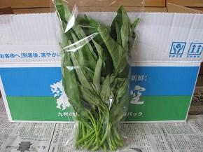 九州の空、空心菜