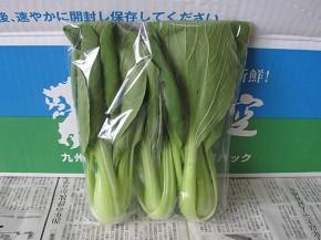 九州の空、チンゲン菜