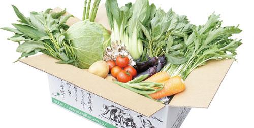 無農薬野菜のミレーの野菜セット