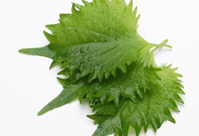 通販した野菜、大葉の保存方法