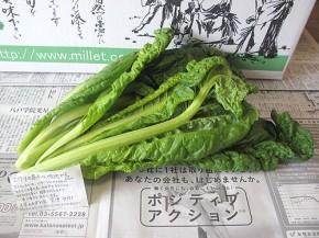 かつお菜(無農薬野菜のミレー)