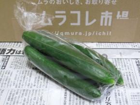 九州ムラコレ市場、キュウリ