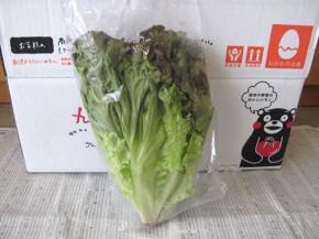 サニーレタス(九州野菜王国)
