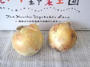 塩たまちゃん(九州野菜王国)