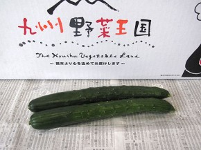 きゅうり(九州野菜王国)