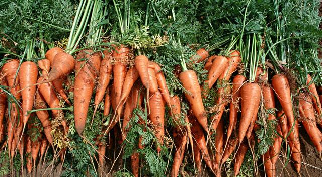 無農薬野菜と有機野菜