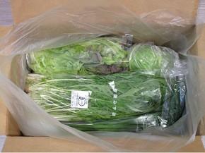 真上からみた、ビオマルシェ有機野菜セット